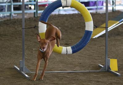 3-11-2017 Bloodhound-1920