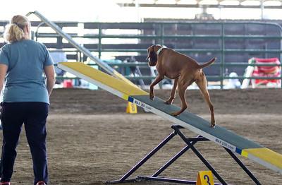 3-11-2017 Bloodhound-1909