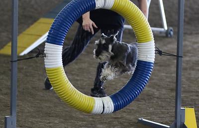 3-11-2017 Bloodhound-1904