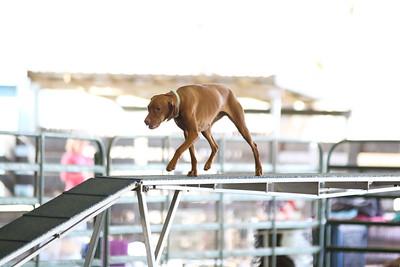 3-11-2017 Bloodhound-1916