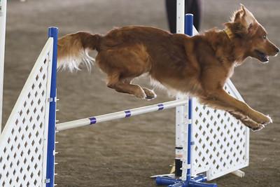3-11-2017 Bloodhound-1924