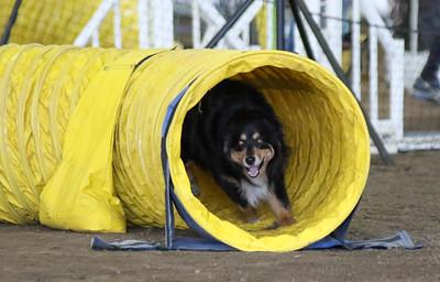 3-11-2017 Bloodhound-9513