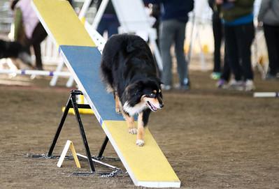 3-11-2017 Bloodhound-9507