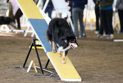 3-11-2017 Bloodhound-9508