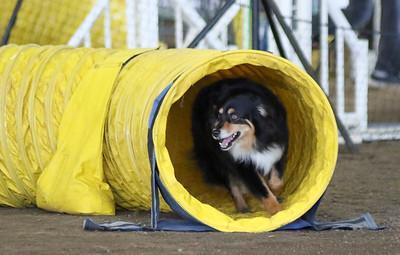 3-11-2017 Bloodhound-9515