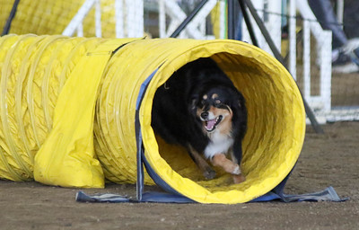 3-11-2017 Bloodhound-9514