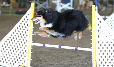 3-11-2017 Bloodhound-9511