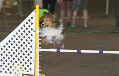 3-11-2017 Bloodhound-1335