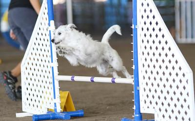 3-11-2017 Bloodhound-1318