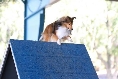 3-11-2017 Bloodhound-1312