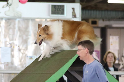 3-20-2017 Collie Club-4902