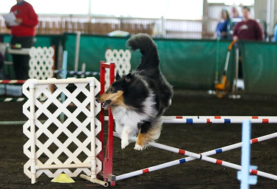 3-20-2017 Collie Club-4842