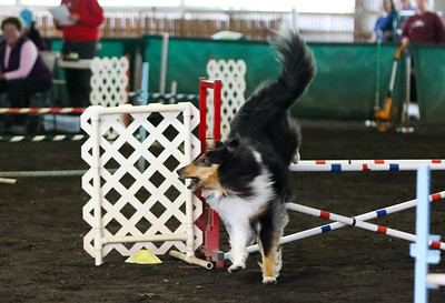 3-20-2017 Collie Club-4843