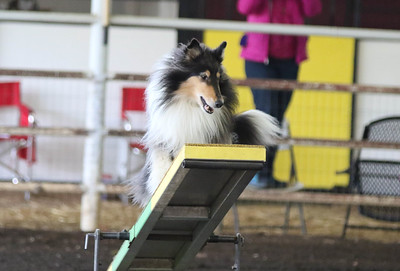 3-20-2017 Collie Club-4830