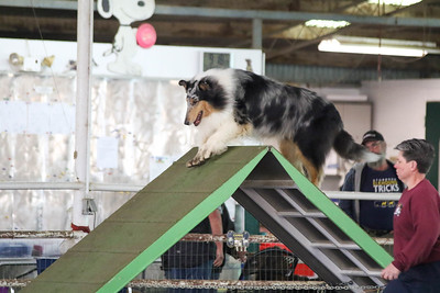 3-20-2017 Collie Club-4888