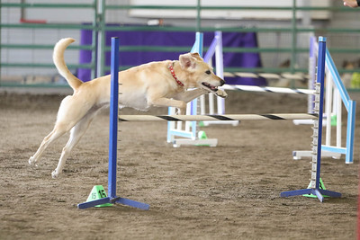 9-3-2017 NorCal Goldens-3132