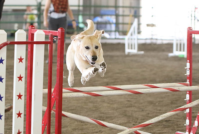 9-3-2017 NorCal Goldens-3142