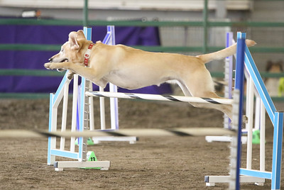 9-3-2017 NorCal Goldens-3136