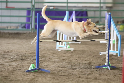 9-3-2017 NorCal Goldens-3133