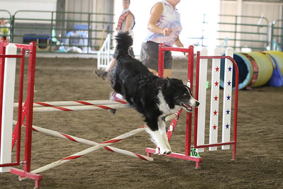 9-3-2017 NorCal Goldens-3151