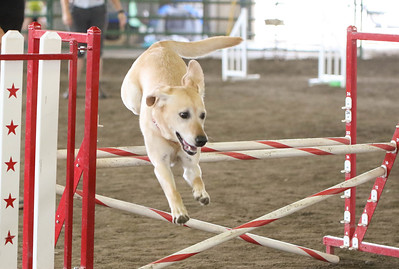 9-3-2017 NorCal Goldens-3143