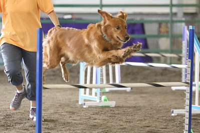 9-3-2017 NorCal Goldens-3157