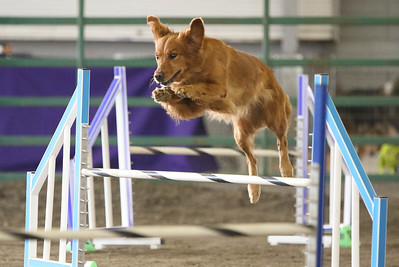 9-3-2017 NorCal Goldens-3155