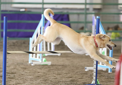 9-3-2017 NorCal Goldens-3134