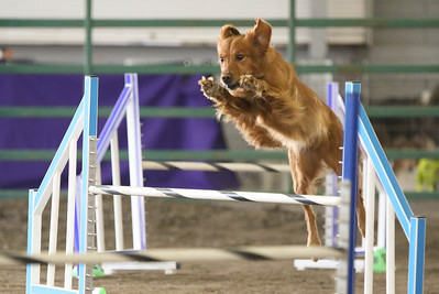 9-3-2017 NorCal Goldens-3154