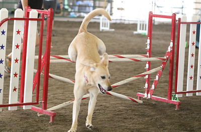 9-3-2017 NorCal Goldens-3144
