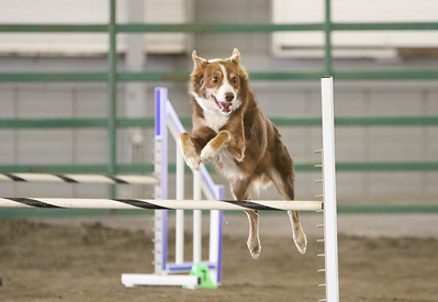 9-3-2017 NorCal Goldens-4017