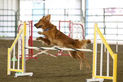 9-3-2017 NorCal Goldens-3997