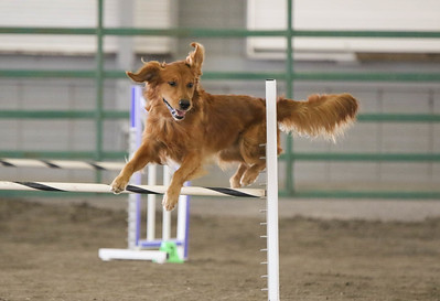 9-3-2017 NorCal Goldens-3992