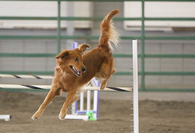9-3-2017 NorCal Goldens-3993