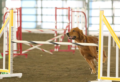 9-3-2017 NorCal Goldens-3995