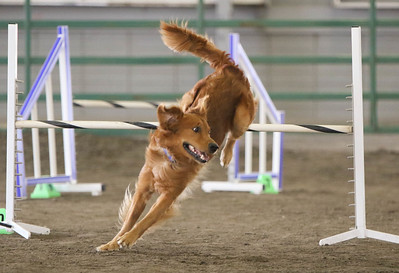 9-3-2017 NorCal Goldens-3994
