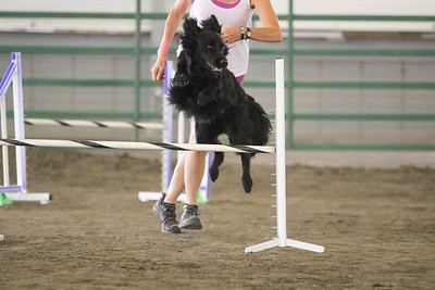 9-3-2017 NorCal Goldens-3977