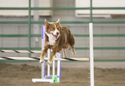 9-3-2017 NorCal Goldens-4018