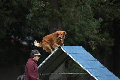 10-14-2018 Mission Poodle-7404