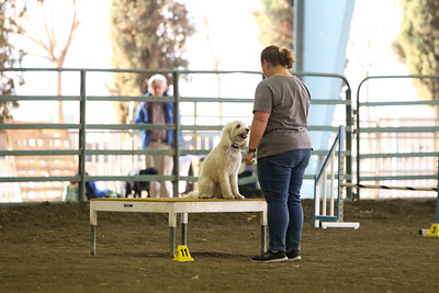 11-11-2018 NorCal Goldens-6522