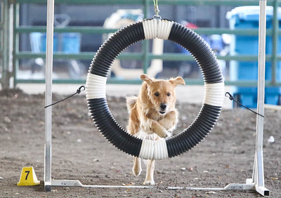 11-11-2018 NorCal Goldens-6138