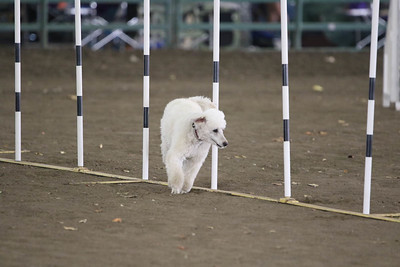 11-11-2018 NorCal Goldens-3675