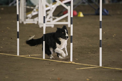 11-11-2018 NorCal Goldens-3648
