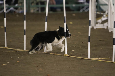 11-11-2018 NorCal Goldens-3645