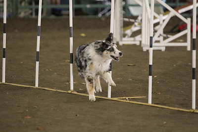 11-11-2018 NorCal Goldens-3625