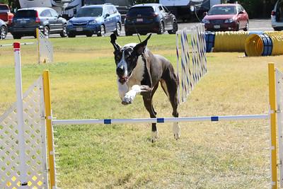 11-4-2018 Border Terrier-1428