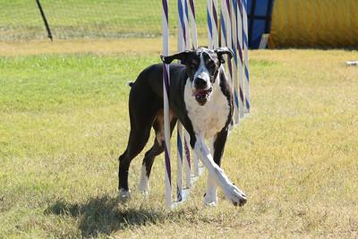 11-4-2018 Border Terrier-1425
