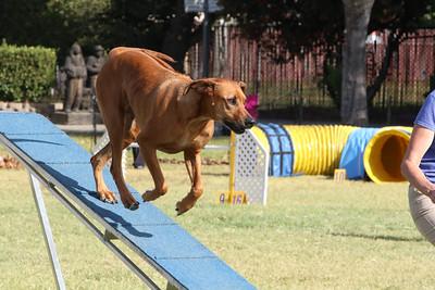 11-4-2018 Border Terrier-0872