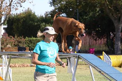 11-4-2018 Border Terrier-0877