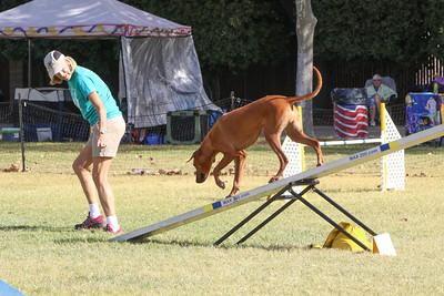 11-4-2018 Border Terrier-0879